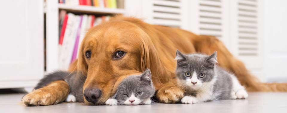 วิธีการดูแลสัตว์เลี้ยงให้มีสุขภาพดีตลอดปี