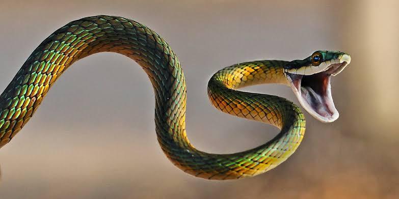 งูเป็นสัตว์เลื้อยคลานที่มีอันตรายทั้งต่อคนและสัตว์เลี้ยง